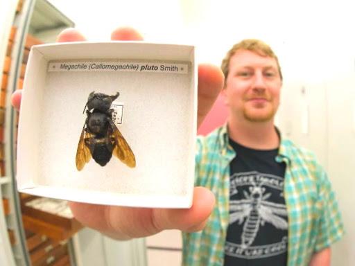 सबसे बड़ी मधुमक्खी