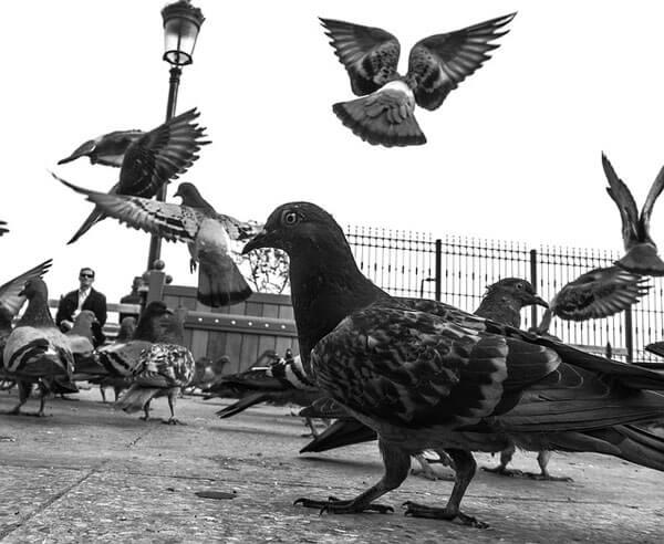 Dove is dangerous